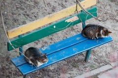 Dois gatos em um banco Imagens de Stock