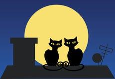 Dois gatos em um telhado Fotografia de Stock