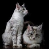 Dois gatos em uma tabela imagens de stock