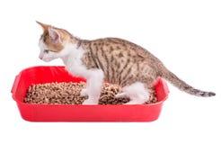 Dois gatos engraçados que jogam em um toalete do gato Imagem de Stock Royalty Free