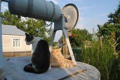 Dois gatos estão sentando-se no poço Foto de Stock