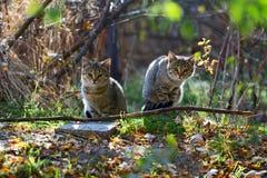 Dois gatos macios cinzentos sentam-se perto dos ramos Fotografia de Stock