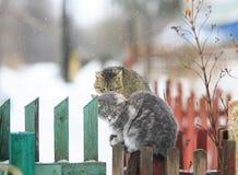 Dois gatos na cerca na primavera assento e a queda no weat mau Imagens de Stock Royalty Free
