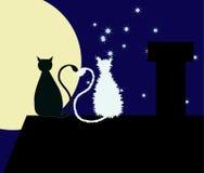 Dois gatos no telhado Foto de Stock Royalty Free