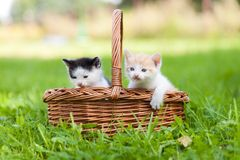 Dois gatos pequenos na cesta ao ar livre Fotos de Stock Royalty Free