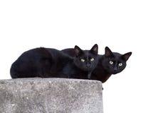 Dois gatos pretos Foto de Stock Royalty Free