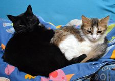 Dois gatos que abraçam na cama foto de stock