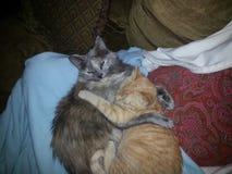 Dois gatos que aconchegam-se na cadeira Imagem de Stock Royalty Free