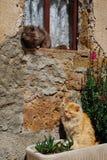 Dois gatos que apreciam a luz do sol Fotos de Stock Royalty Free