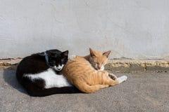 Dois gatos que dormem junto na rua fotografia de stock
