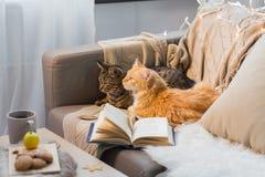 Dois gatos que encontram-se no sofá em casa Fotografia de Stock Royalty Free