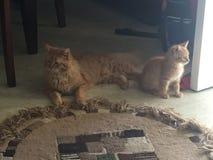 Dois gatos que penduram para fora em torno da casa fotos de stock royalty free