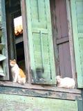 Dois gatos que sentam-se em um quadro de janela Imagens de Stock Royalty Free