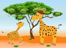 Dois giraffes Fotografia de Stock Royalty Free