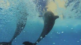 Dois golfinhos subaquáticos video estoque