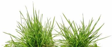 Dois grupos da grama verde isolados imagens de stock royalty free