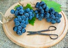 dois grupos de uvas azuis com folhas verdes Imagem de Stock