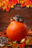 Dois hamster no cenário do outono Imagens de Stock Royalty Free