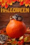 Dois hamster no cenário do outono para o Dia das Bruxas Imagens de Stock