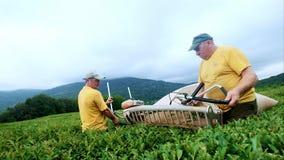 Dois homens são contratados no chá de montagem em uma plantação de chá Conjunto automático do chá video estoque