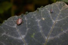 Dois insetos que penduram ao redor em uma folha fotografia de stock royalty free