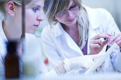 Dois investigadores fêmeas que realizam a pesquisa Fotografia de Stock Royalty Free