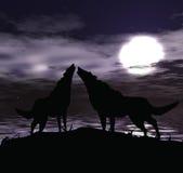 Dois lobos ilustração do vetor
