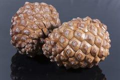 Dois lustrosos do preto do cone do pinho marrom isolados imagens de stock