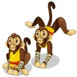 Dois macacos em um traje do karaté Animais do vetor ilustração stock