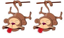 Dois macacos incomuns bonitos do macaco do vetor Foto de Stock