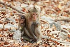 Assento de dois macacos Fotografia de Stock Royalty Free