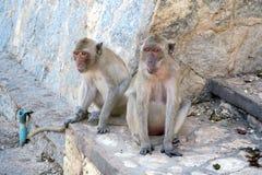 Dois macacos que sentam-se no assoalho Fotografia de Stock Royalty Free