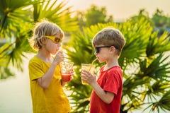 Dois meninos bebem batidos saud?veis contra o contexto das palmeiras Batidos da manga e da melancia Nutri??o saud?vel foto de stock