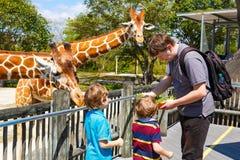 Dois meninos das crianças e girafa de observação e de alimentação do pai dentro Fotos de Stock