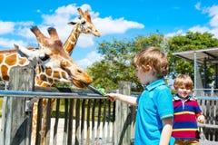 Dois meninos das crianças e girafa de observação e de alimentação do pai dentro Imagem de Stock Royalty Free
