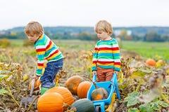 Dois meninos das crianças que escolhem abóboras remendo na abóbora de Dia das Bruxas ou da ação de graças Fotos de Stock Royalty Free