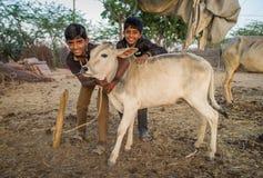 Dois meninos e vitelas Fotos de Stock Royalty Free
