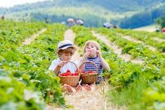 Dois meninos pequenos do irmão na morango cultivam no verão Foto de Stock