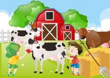 Dois meninos que alimentam vacas na exploração agrícola Fotografia de Stock