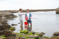Dois meninos que coletam escudos na praia Fotos de Stock Royalty Free