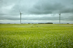 Dois moinhos de vento no campo do linho Foto de Stock