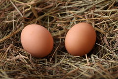 Dois ovos imagem de stock