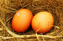 Dois ovos dourados Foto de Stock Royalty Free