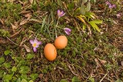 Dois ovos reais na terra com plantas Imagens de Stock