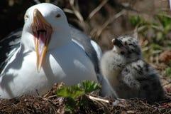 Dois pássaros Imagens de Stock