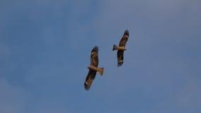 Dois pássaros Fotografia de Stock