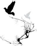 Dois pássaros Fotos de Stock