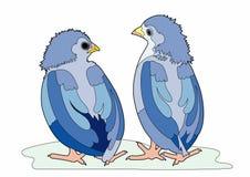 Dois pássaros azuis Foto de Stock Royalty Free