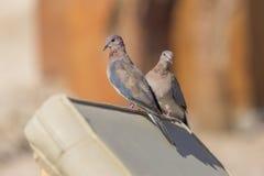 Dois pássaros bonitos Foto de Stock