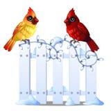 Dois pássaros cardinais do norte bonitos sentam-se em uma cerca de madeira nevado isolada no fundo branco Amostra de Natal e novo Ilustração Stock